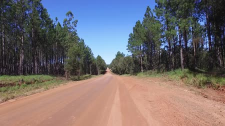 drive : View along dirt road rising to tree top aerial or track in outback rural Australian mountain ranges from native pine forest plantation woodlot. Good for holiday travel, exploring, camping, freedom, four wheel drive 4wd themes or getting lost in the wilder Stock Footage
