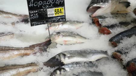 labrax : the fish is fresh-frozen in ice Stock Footage