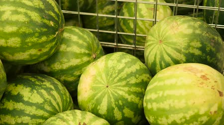 raflar : the selection and purchase watermelon in the store