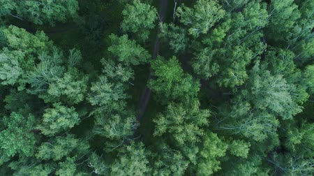 z lotu ptaka : The drone is flying over the forest. View from above.4k UHD Wideo