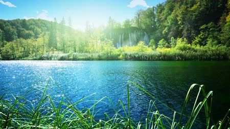 deep forest : Lake in deep forest, Plitvice, Croatia Stock Footage