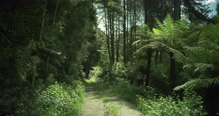 reus : road in forest, Otway National Park, Australia