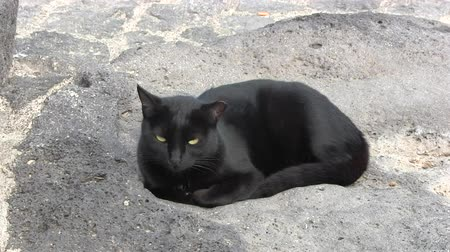 kotki : black cat siting in the sun Wideo