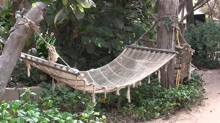 paraíso : Hammock swinging between palm trees on a tropical beach.