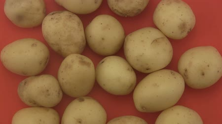 brambory : Close up of fresh organic potatoes rotating on a red  background. Dostupné videozáznamy