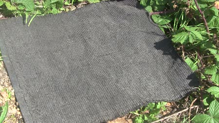brit : Four Grass Snakes basking under a reptile survey mat. The mat is removed to show the snakes then replaced when they have slithered off into the undergrowth.