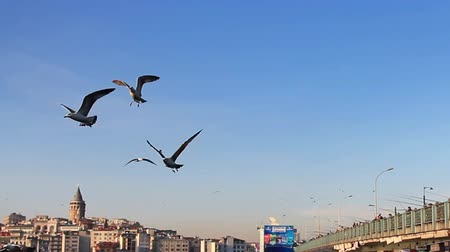 birds flying : Seagulls in Istanbul