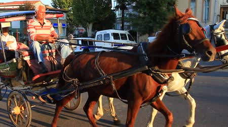hackney carriage : ISTANBUL - OCT 14: Senior man riding his horse driven cart on Buyukada on October 14, 2012 in Istanbul. All the buggies will replace with electric carriages in near future as the harsh working conditions of the horses. Stock Footage