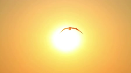 птица : Summertime, Slow motion. Seagulls flying into the sky towards the sun. Стоковые видеозаписи