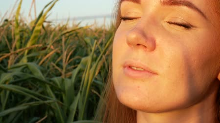 caqui : Portrait of a beautiful red-haired girl in a corn field. Sweet young woman basking at sunset rays. Agricultural Footage. Close up Stock Footage
