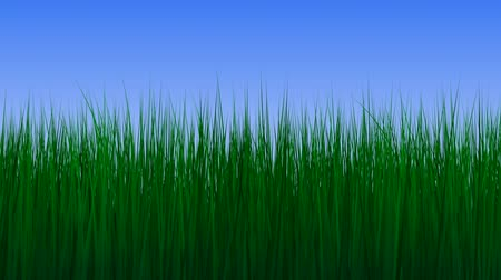 çim : Growing green grass against gradient blue background Stok Video