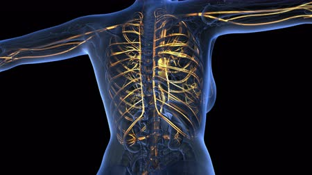 infarct : loop science anatomy of human body in x-ray with glow blood vessels on blue. alpha channel Stock Footage
