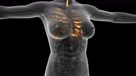choroba : science anatomy of woman body with glow lungs. alpha channel