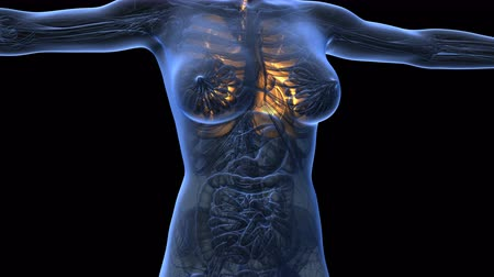 choroba : science anatomy of woman body with glow lungs Wideo
