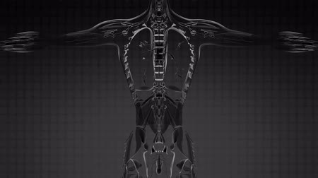 tomograph : Loop Science Anatomy Tomography Scan Of Human Body