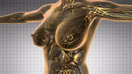 mar : loop science anatomy scan of woman limphatic system glowing with yellow