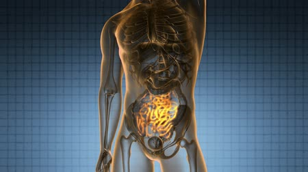 interno : science anatomy scan of human small intestine glowing with yellow