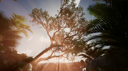 clima tropical : Sunset beams through Palm Trees at jungle rainforest
