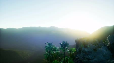 hory : 4k Aerial view of beautiful palm trees and mountains
