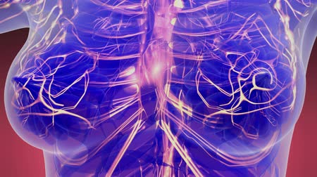 infarct : science anatomy scan of woman heart and blood vessels glowing Stock Footage