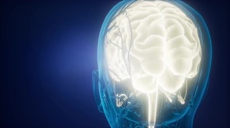 brain : science anatomy scan of human brain and nerves glowing Stock Footage