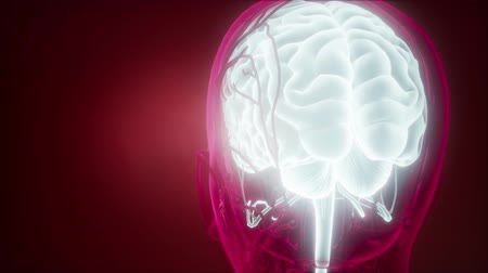 nerves : science anatomy scan of human brain and nerves glowing Stock Footage