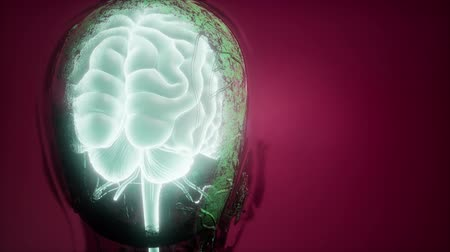 gland : science anatomy scan of human brain and nerves glowing Stock Footage