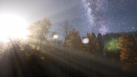 slider shot : Milky Way stars with moonlight above pine trees forest