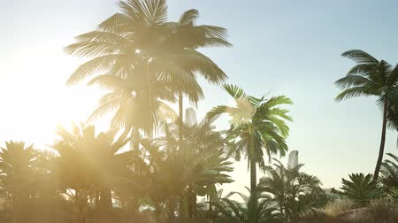 palmtree : Tropical beach in sunny day