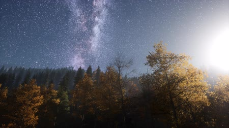 dead forest : Milky Way stars with moonlight above pine trees forest