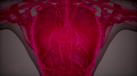 doença : 3D magnetic resonance image scan Stock Footage