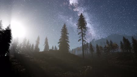 estrelado : Milky Way stars with moonlight above pine trees forest