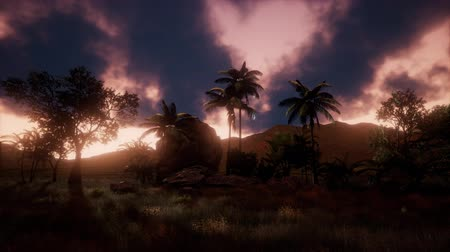 dinlendirici : Silhouette of palm trees and a beautiful sunset at tropical mountain landscape Stok Video