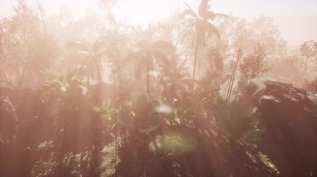 tropikal iklim : Sunlight shining in tropical jungle Stok Video