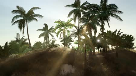 dominik : Tropical beach in sunny day