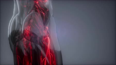 sipariş : Blood Vessels of Human Body