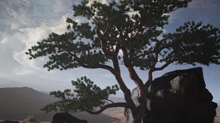 grenli : pine tree in a sand desert