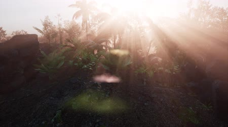 borneo : Incredible tropical green forest view with sun flare in morning.