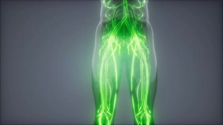 film : Blood Vessels of Human Body