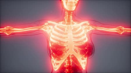 anatomický : Transparent Human Body with Visible Bones