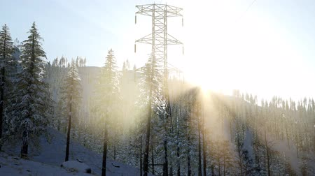kolumny : electric line at sunrise in snow covered forest