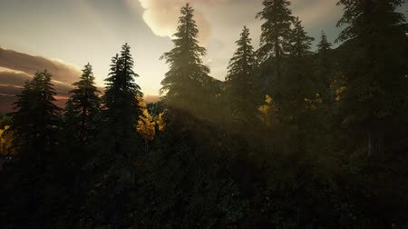 mitikus : Sunlight in Forest at Sunset