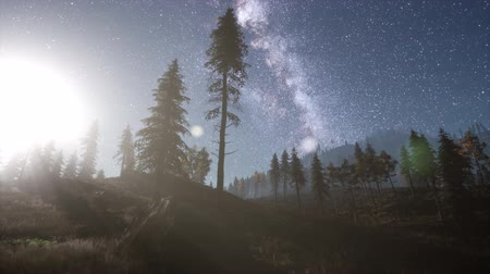 mléčný : Milky Way stars with moonlight above pine trees forest