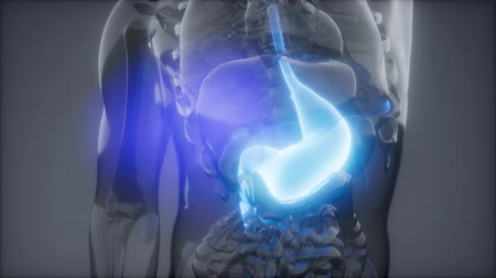 consumir : Human Stomach Radiology Exam Stock Footage