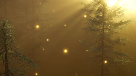 mistig : Magical Forest with Sparkles Stockvideo