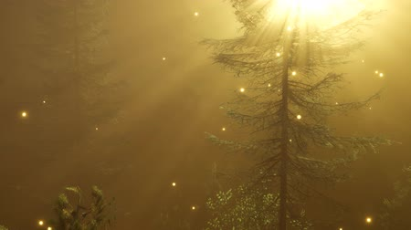 fireflies : Magical Forest with Sparkles Stock Footage