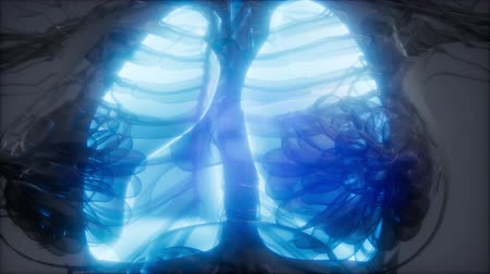 リブ : Human Lungs Radiology Exam