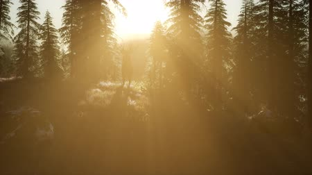 wilderness : Deer Male in Forest at Sunset