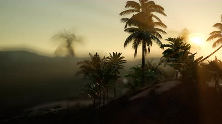 molas : View of the Palm Trees in Fog