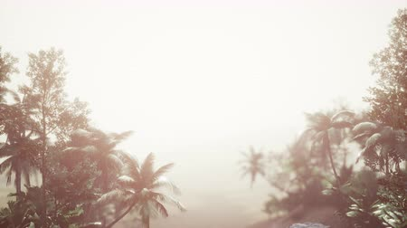 raios de sol : Tropical Palm Rainforest in Fog Stock Footage